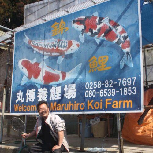 Action Maruhiro Koi Farm